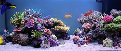 Reef Aquascape by Aquascaping Your Nano Reef Saltwater Conversion