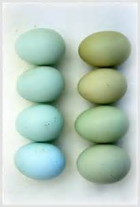 what color are blue eggs the world s catalog of ideas