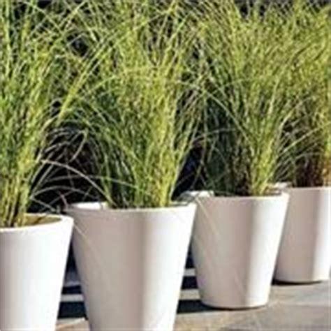 piante da esterno in vaso perenni piante in vaso piante appartamento