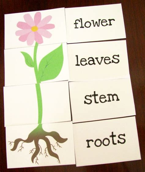 great printable resources plants l is for learning