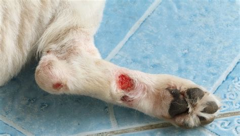 how to clean a wound how to clean a wound a step by step guide top tips