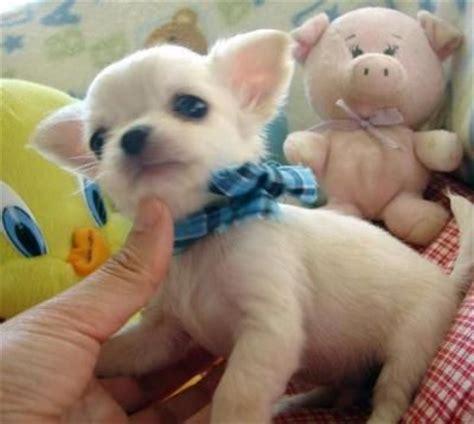 free puppies nashville tn pets nashville tn free classified ads