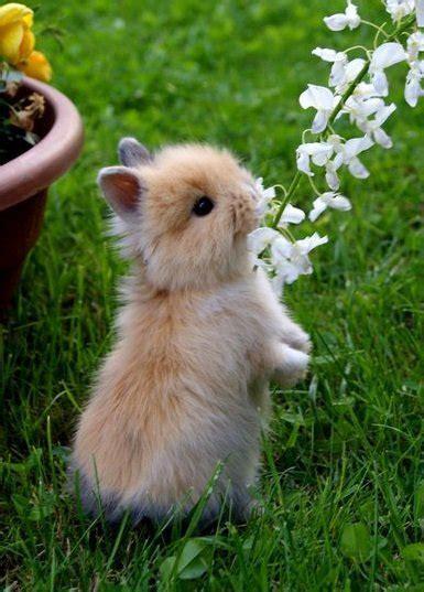 coniglietti nani alimentazione testa di ariel la stalla dei conigli allevamento e