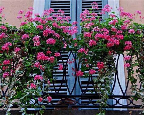 balcony flowers bright balcony decorating with flowers 20 blooming
