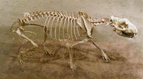 twitch stock history aelurodon fossil 1 by rhabwar troll stock on deviantart