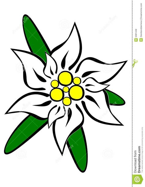 edelweiss stock vector image of davidundderriese silver