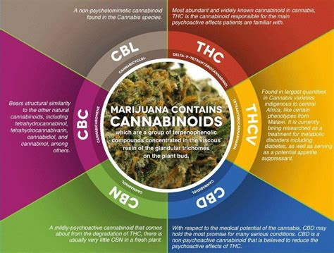 cbd hemp the secret cure of the human books les cannabino 239 des et leurs propri 233 t 233 s m 233 dicales du