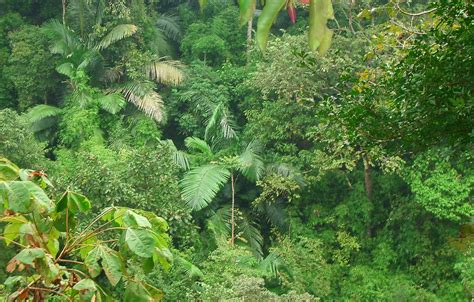 plants found in tropical evergreen forest gt gt tropical evergreen forest