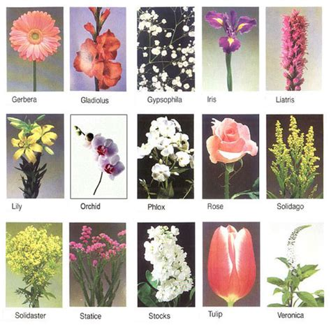 Pictures Of Flower Names Google Search Flower Posts Cut Flower Garden List
