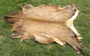 Moose Hide Rug Tanning Hides In A Few Easy Steps 101 Ways To Survive