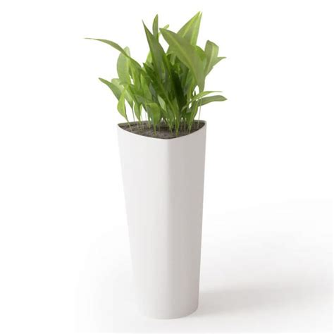 potted plant  tall white vase  model cgtrader