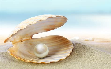 Kerang Oyster oyster pearl wallpapers