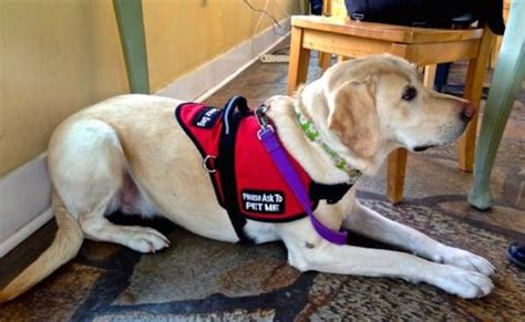 how to service dogs as a career surprises his sick in hospital sentimental stories from 5 littlethings today