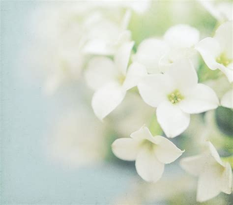 white flower images event inspiration dreamy photography by shana rae the