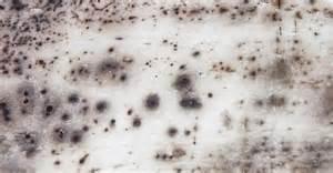 essentiel 224 conna 238 tre sur les moisissures dans un logement