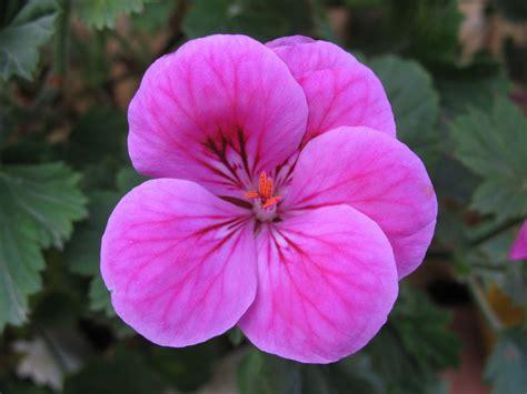 Imagenes Flores Colombianas | flores colombianas galer 237 as fotonatura org