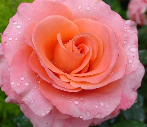 imagenes bellas en pinterest 30 im 225 genes bonitas de flores hermosas para apreciar y