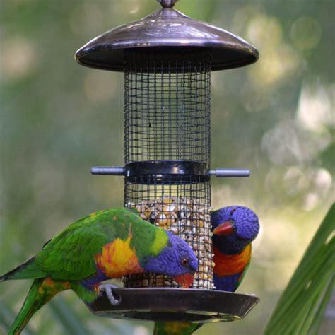 Bird Feeders Australia hopper bird feeders bird feeders for australia