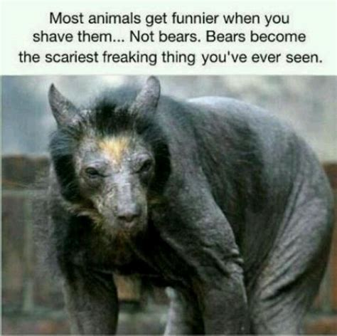 shaved bear scary lol pets pinterest