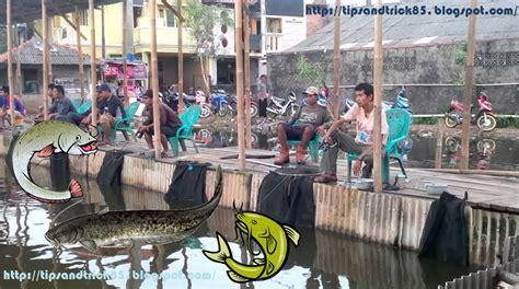 Pakan Ikan Lele Mancing Di Kolam umpan babon galatama lele informasi tips and trick