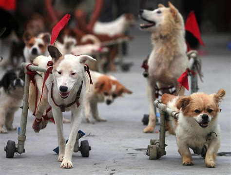annual for dogs animal rescue center for disabled dogs annual walk imgur