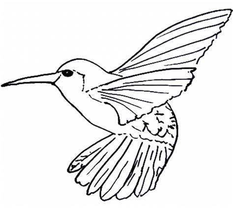 Coloring Page Hummingbird by Hummingbird Coloring Pages Bestofcoloring