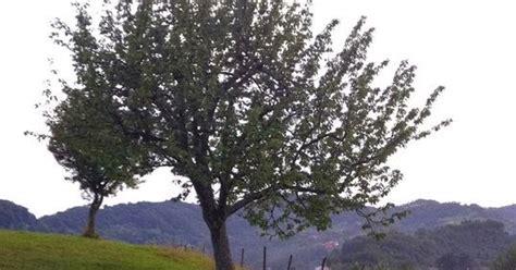 1 cherry tree groveland ma colette s vita a visit to northern italy marositca