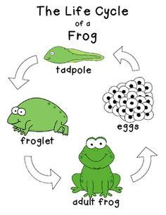 Cycle Of A Frog Worksheet by 1000 Images About Cycles On Cycles