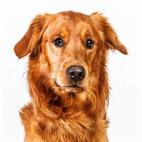 real puppies dogface real dogs real expression by barbara o brien visogler