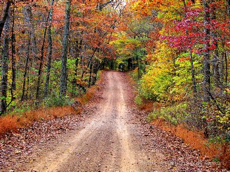 Cyber Monday Home Decor by Quot Autumn Country Road Quot By Naturegreeting Cards 169 Ccwri
