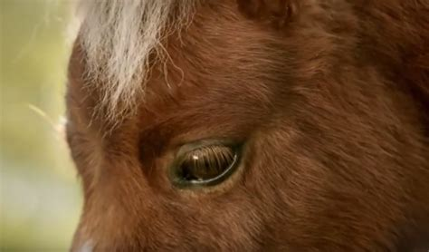 amazon commercial actress horse new amazon prime commercial features lonely little horse