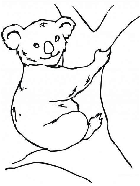 printable koala coloring pages free printable koala coloring pages for kids