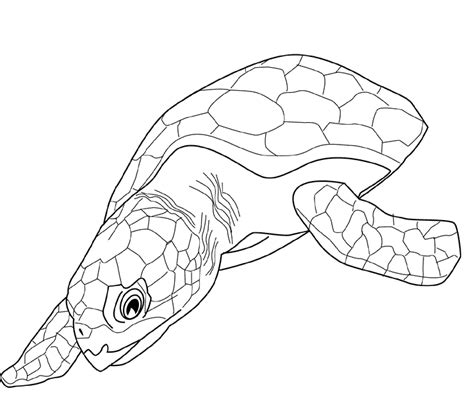 Coloring Page Sea Turtle by Free Printable Turtle Coloring Pages For