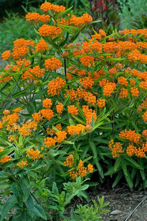 blooming plants favorite summer blooming perennials hgtv