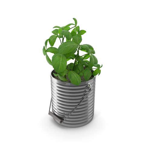 basil plant png images psds   pixelsquid