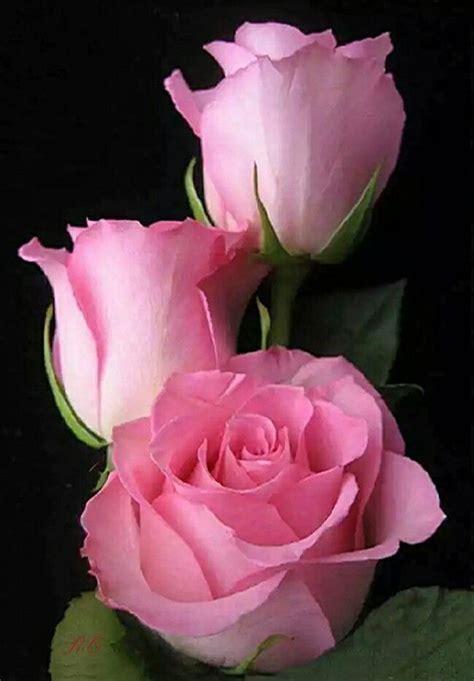 Imagenes De Flores Naturales Bonitas | m 225 s de 25 ideas incre 237 bles sobre flores naturales en