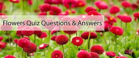 Questions Answers Plants flowers quiz questions with answers quiz on flowers