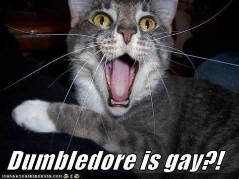 Gay Cat Meme - funny cat dumbledore is gay jokes memes pictures
