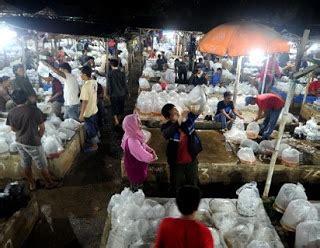 Bibit Ikan Koi Depok ikan hias murah di lokasi pasar ikan hias parung ikan