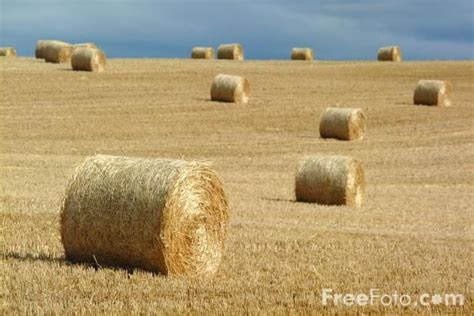 best 25 hay bale pictures ideas on senior