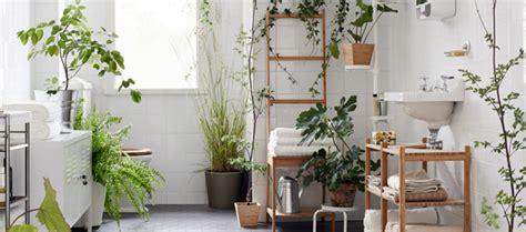 planten in badkamer 8 perfecte planten voor in de badkamer douche concurrent