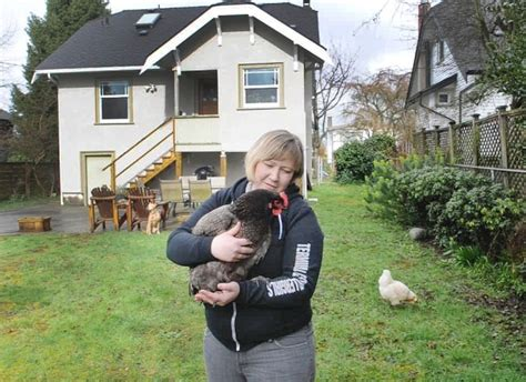 backyard chickens vancouver backyard chickens are becoming increasingly popular in