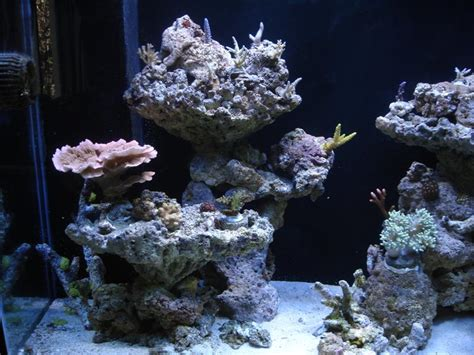 Reef Aquascaping Ideas by Aquascaping Marine Minimalist Aquascaping Page 31