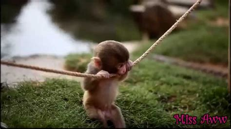 Really Cute Baby Monkeys   Wallpapers Gallery