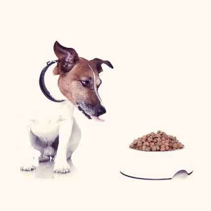 can yorkies eat chicken foods my yorkie can eat petcarerx