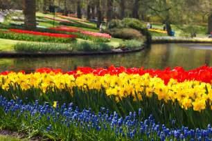 Keukenhof Flower Gardens Keukenhof Flower Gardens Free Stock Photo Domain Pictures
