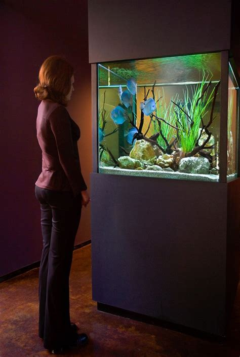 aquarium design group discus aquarium design group aquarium pinterest aquariums