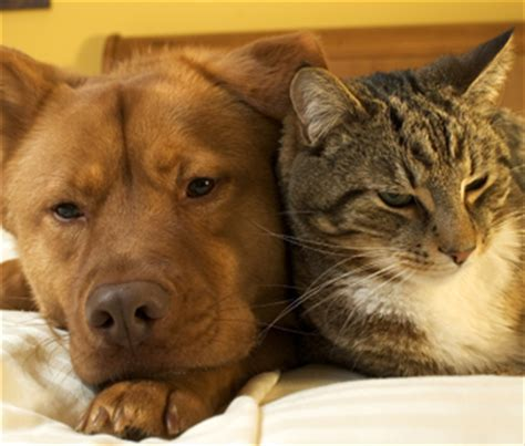 cats and dogs living together keep your cat and together and happy with careful planning