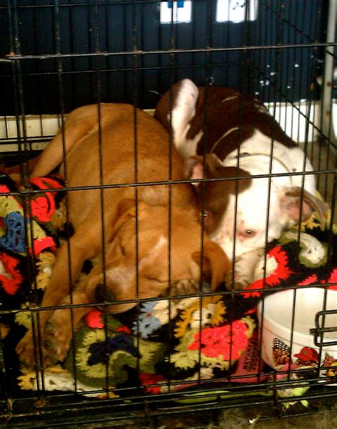 puppy in crate during day crate your puppy during the day the best 2017