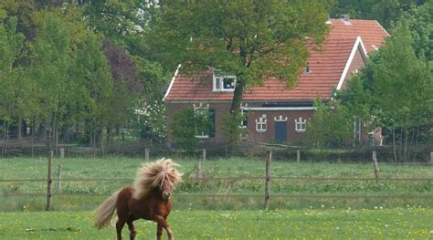 how much weight can a horse carry comfortably horse weight calculator good horse